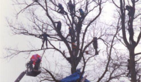 Newbury Bypass Protestors 1996