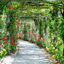 flowers, arches, passage