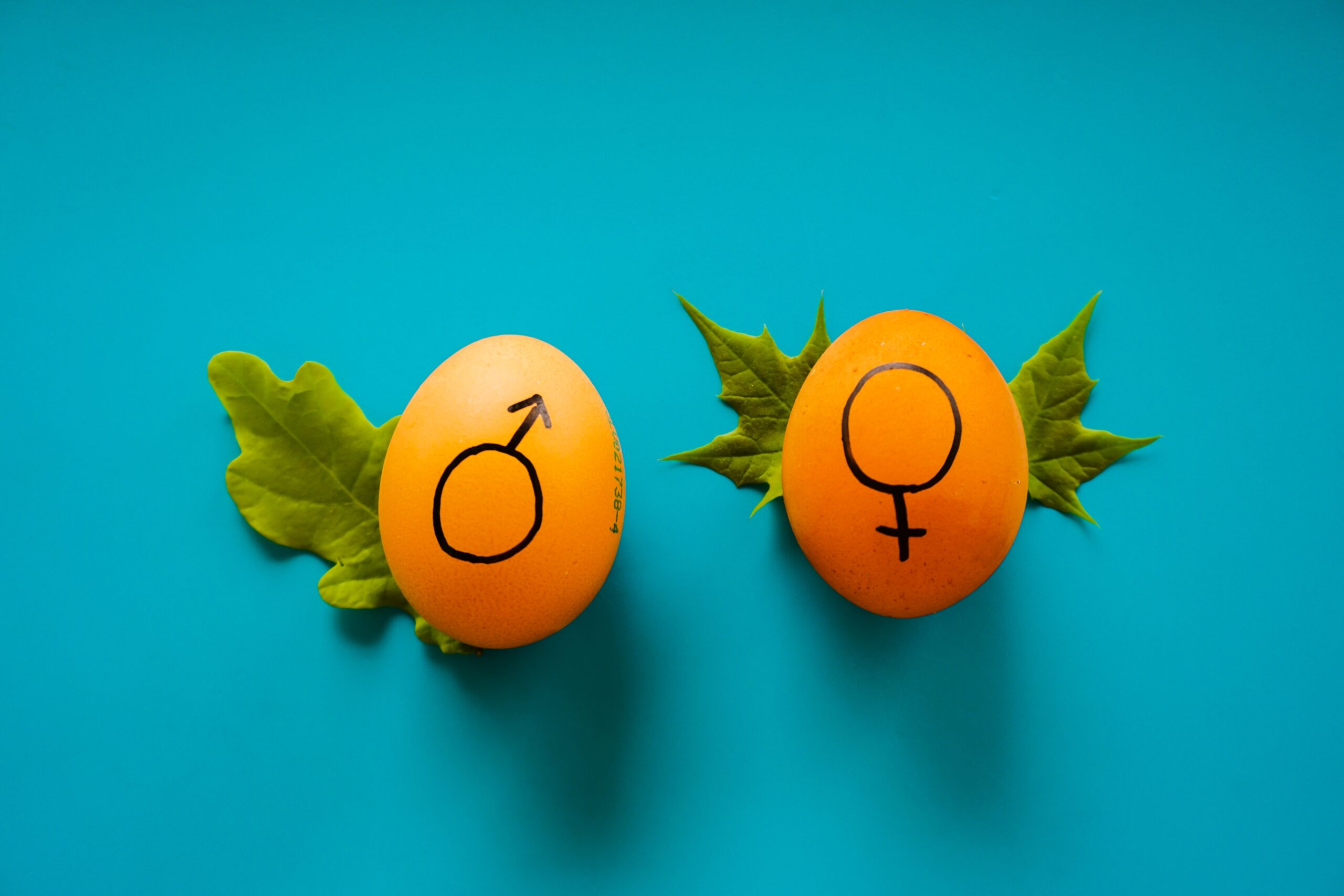 Mastering The Concept Of Word Gender In Brazilian Portuguese
