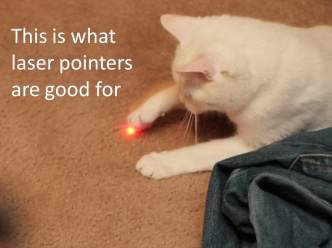 cat and laser pointer with writing