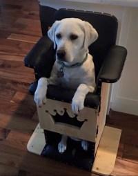 New Help for Dogs With Megaesophagus  Spot Speaks