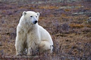 This polar bear is named John. He is cold and lives in Lake County.