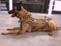 German Shepherd Police Gear | Autos Post
