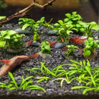 Fish Options for Stocking a Fluval Spec Aquarium (III and V)