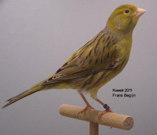 agaat-geel-schimmel