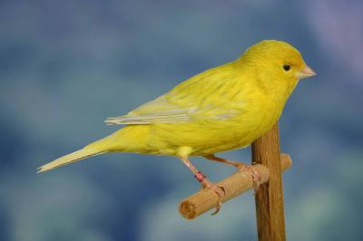 agaatopaal-geel-intensief