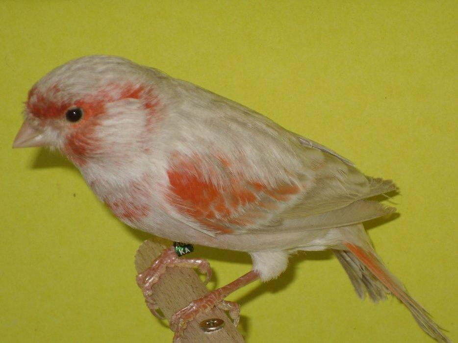 bruiopaal-rood-mozaiek-type-2