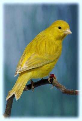 isabel-geel-intensief