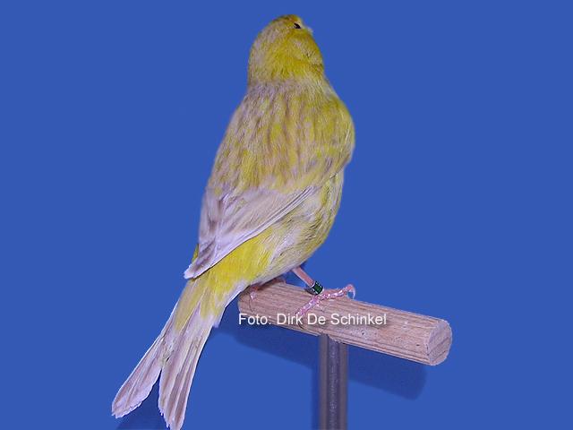 isabel-geel-schimmel