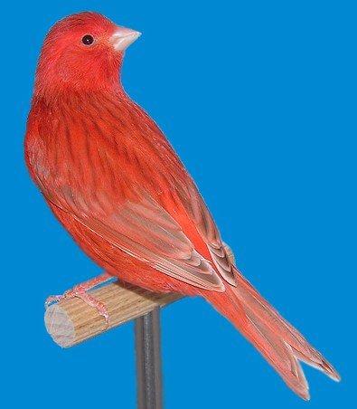 isabel-rood-intensief