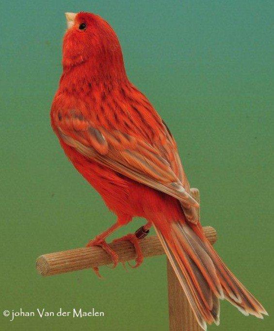 isabelpastel-rood-intensief