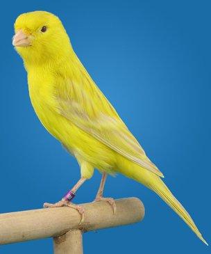 satinet-geel-intensief