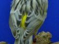 agaattopaas-geel-mozaiek-type-2