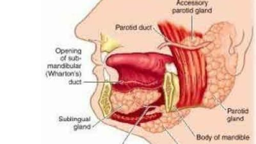 small resolution of submandibular sialadenitis standard treatment guidelines speciality medical dialogues