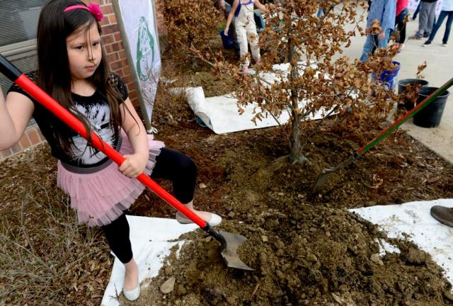 When And Where Will #TeamTrees Plant 21.5 Million Crowdfunded Trees?