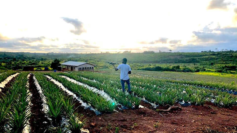 Aicon Andah COO of GEM Industrial Solutions at a drone test site on a pineapple farm in Cape Coast, Ghana, in October 2018.