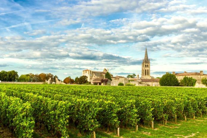 Vineyards of Saint Emilion, vineyards of Bordeaux in France