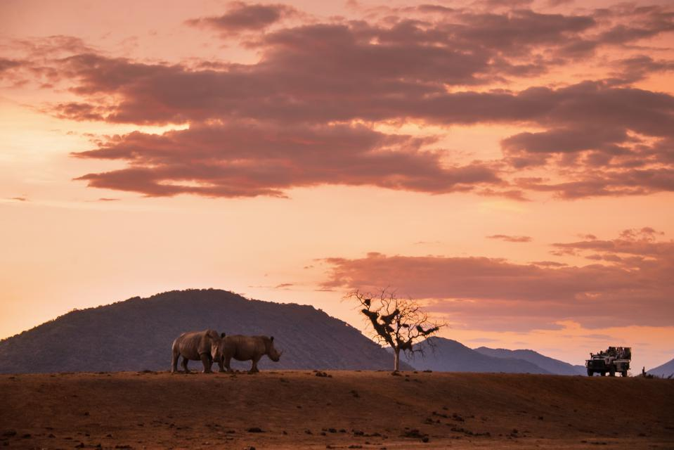 safari south africa where to go 2021