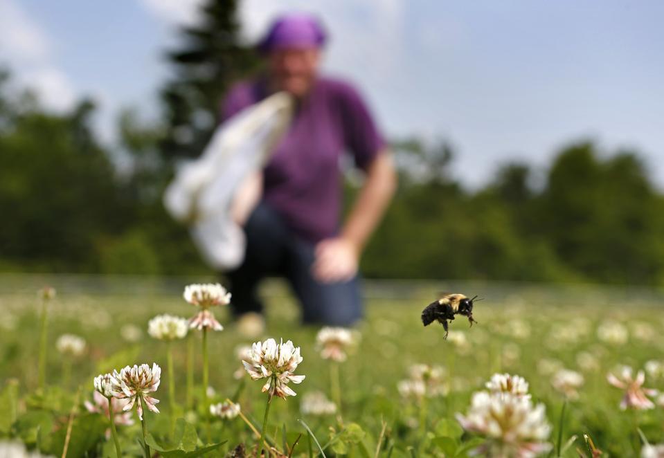 Bumblebee Audit Monitoring Network USDA Native Wild Bees