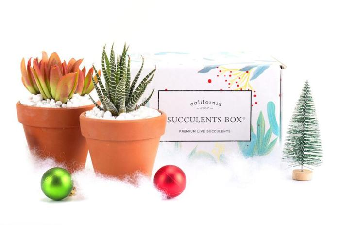 Succulents box monthly subscription