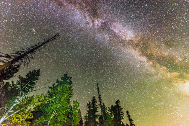 Pine Trees and Milky Way Stars in Night Sky Landscape