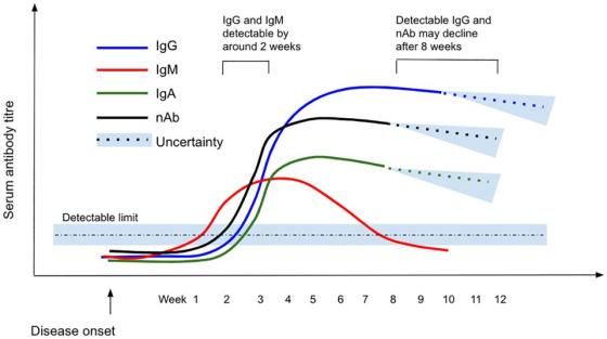 A diagram showing the time and extent of antibody responses starting from the time of disease onset