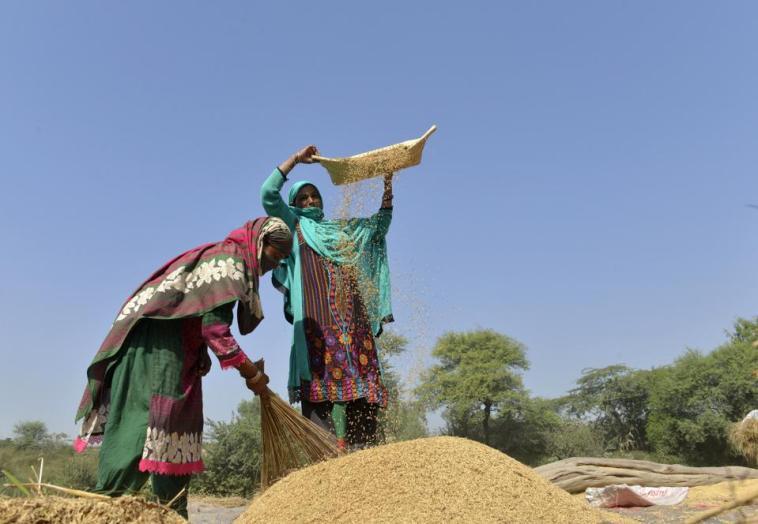 Pakistani women work in a rice field in Lahore on October 14, 2016. (Photo credit: ARIF ALI/AFP/Getty Images)