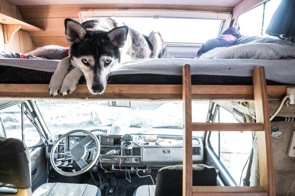 Husky in einem Wohnmobil