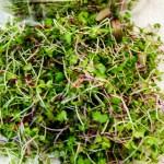 Microgreens Garnish