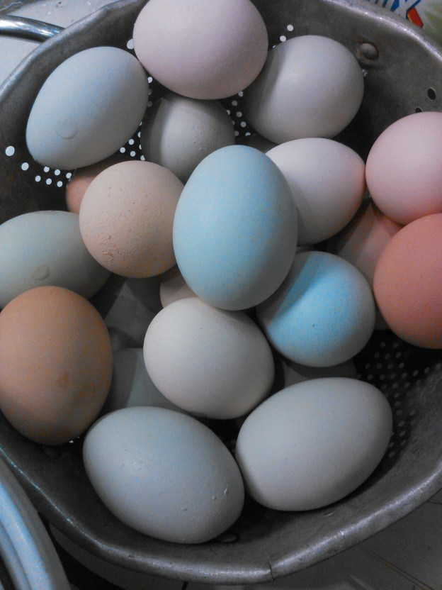 2017CSA_Winter_Mar_11 eggs