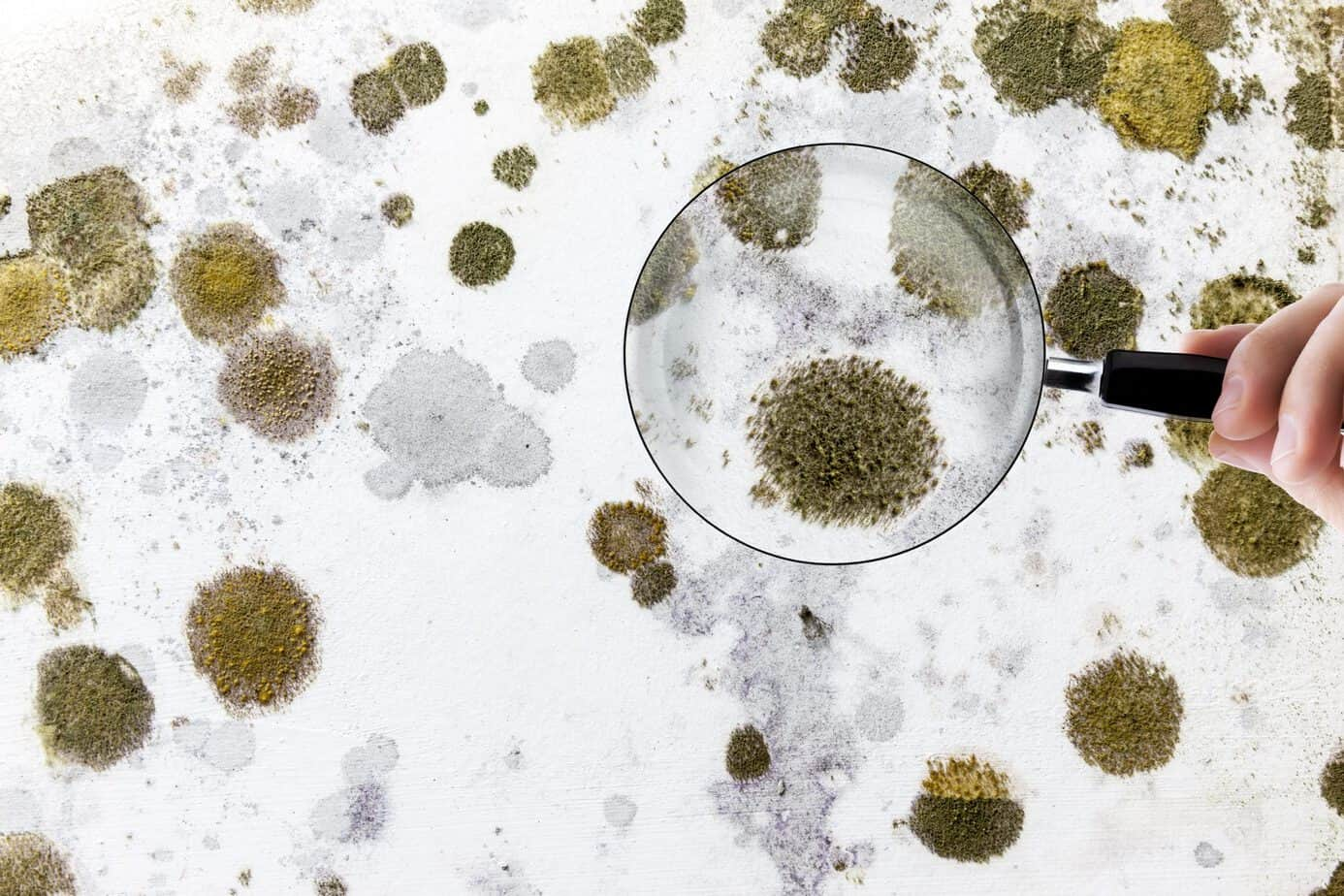 Mold under microscope