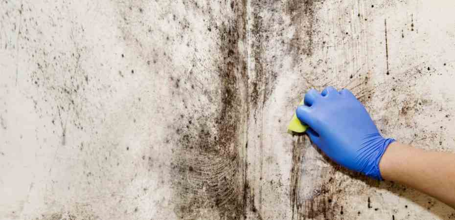 Does Mold Have A Smell? Can you Smell Mold? - Specialty Air