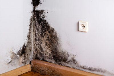 Black Mold image on the corner of room wall