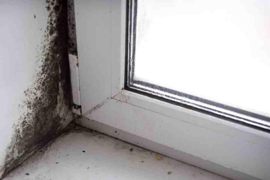 black mold under window