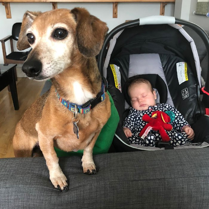 Laura's-Pup-and-Baby