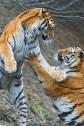 Billies Fight