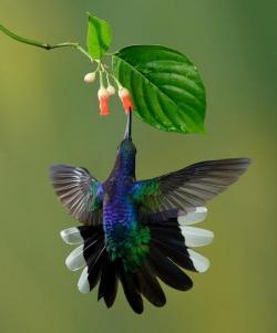 Trophic level interaction between wild flora and fauna. Image Credit: Vivi Granado