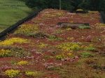 How can Green Roofs improve biodiversity?