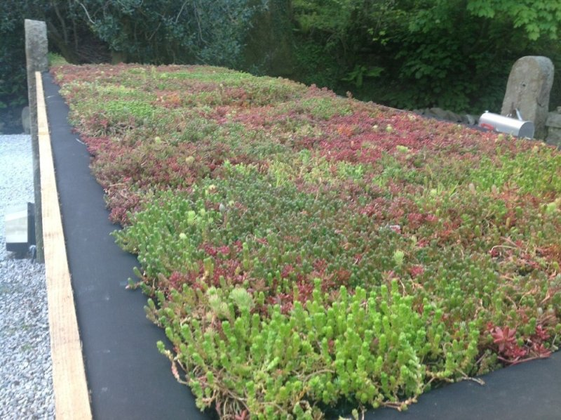 Riefa Lightweight Living Roofs Specifier Review