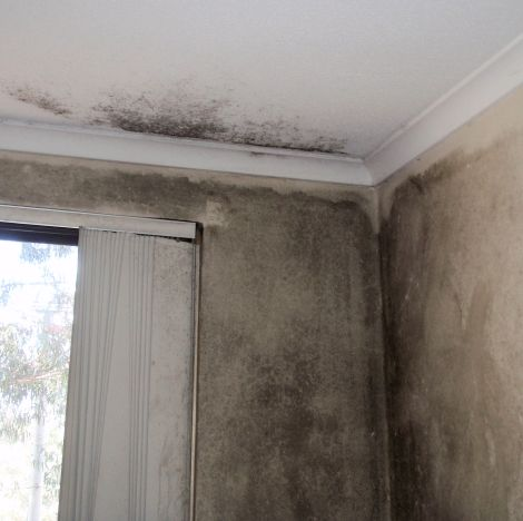 Example of mould growth 1 - HR
