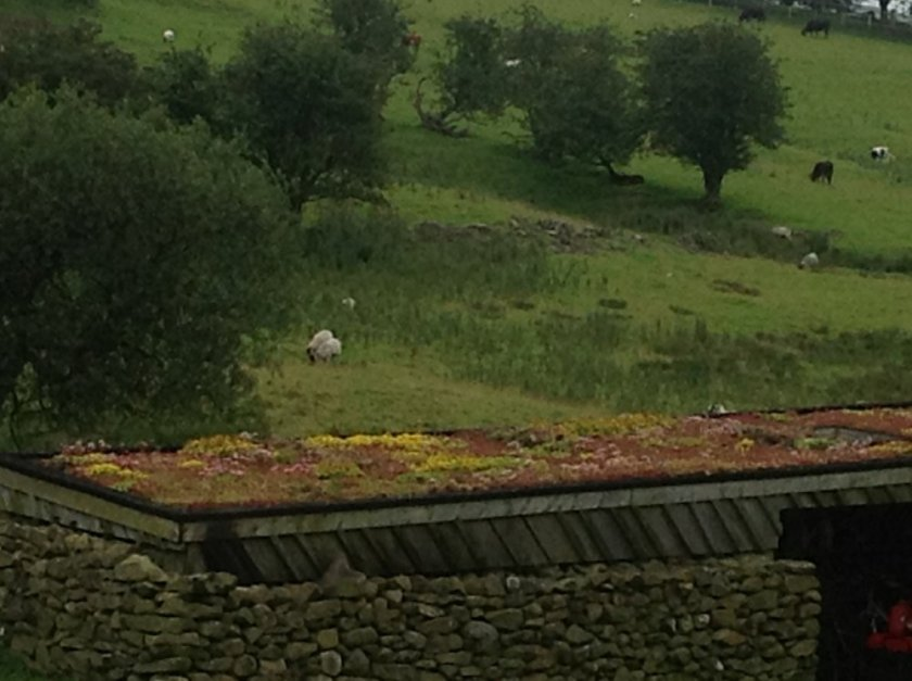 Green Roofs