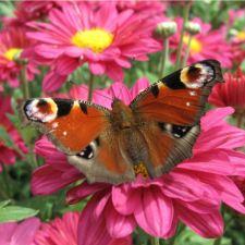 Grow a secret garden for butterflies!