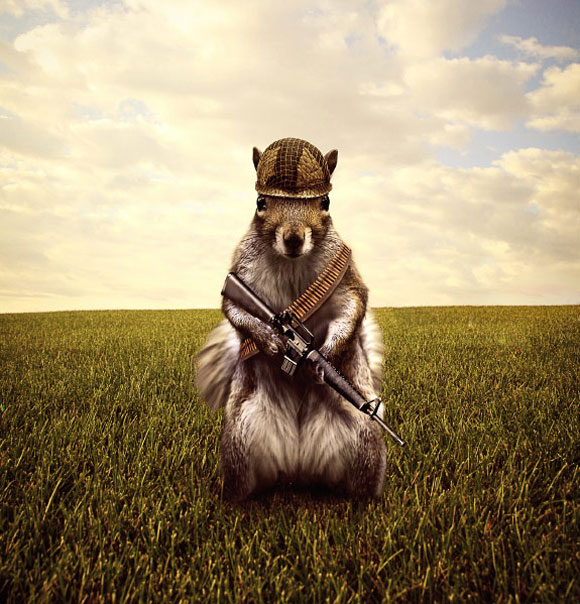 Fall Squirrel Wallpaper 40 Humorous And Creative Photo Manipulations