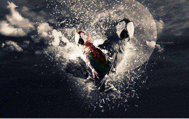 Stunning Parrot Photo Manipulation tutorial in Photoshop