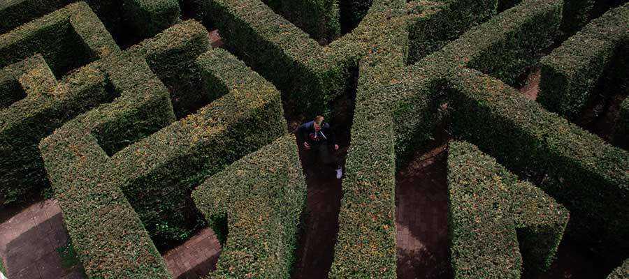 A person in a hedge maze.