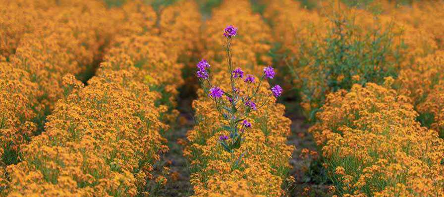 Flowers in a field.