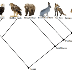 Simple Food Chain Diagram Pioneer Deh X6800bt Wiring Origin/habitat - Spectacled Owl