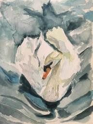 """Swan in Belgium, watercolors, 5"""" x 7"""""""