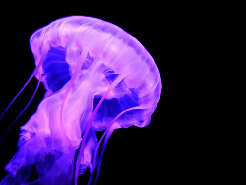the AGE of JELLYFISH | 'SEARCH TERMS'