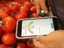 Testing the SCiO handheld spectrum analyzer on tomatoes